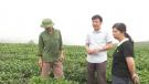 Mỹ Thuận: Phát huy vai trò của thanh niên trong phát triển kinh tế