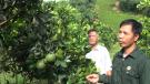 Cựu chiến binh Tân Sơn thi đua xóa đói giảm nghèo