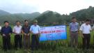 Tân Sơn: Tổng kết mô hình lúa thuần chất lượng cao Kim Cương 111