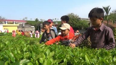 Xây dựng mô hình trường học gắn với cuộc sống ở huyện miền núi Tân Sơn