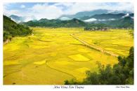 Cánh đồng Kim Thượng